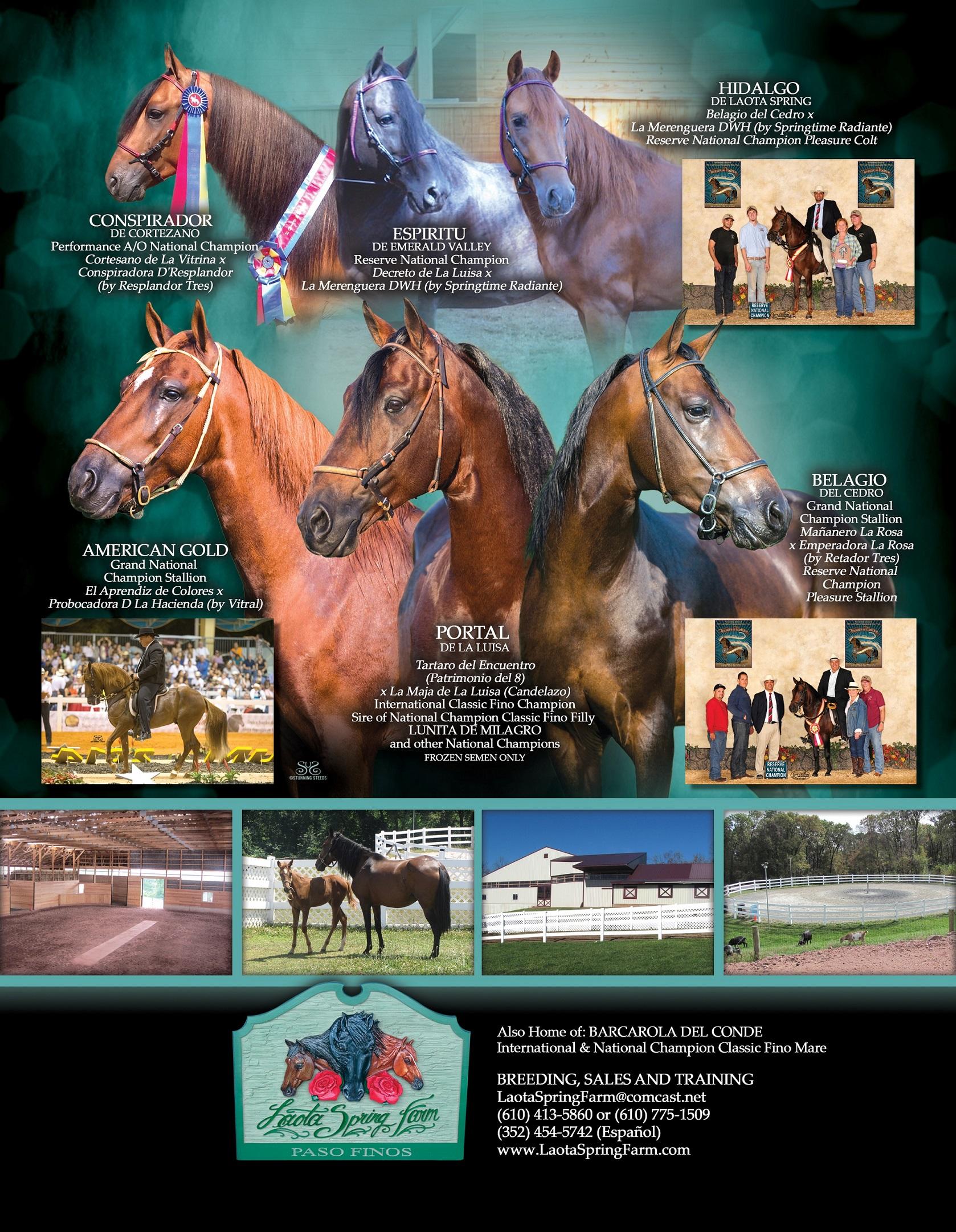 Laota Spring Stallions 2015 RESIZE