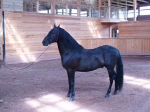 stallion Espiritu